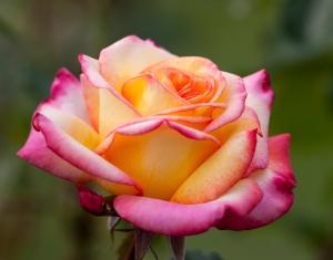 blossom 1443711_95563180